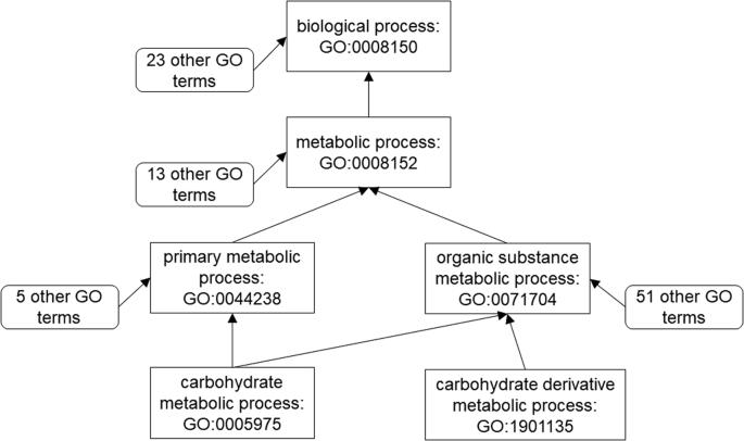 GOGO: An improved algorithm to measure the semantic similarity