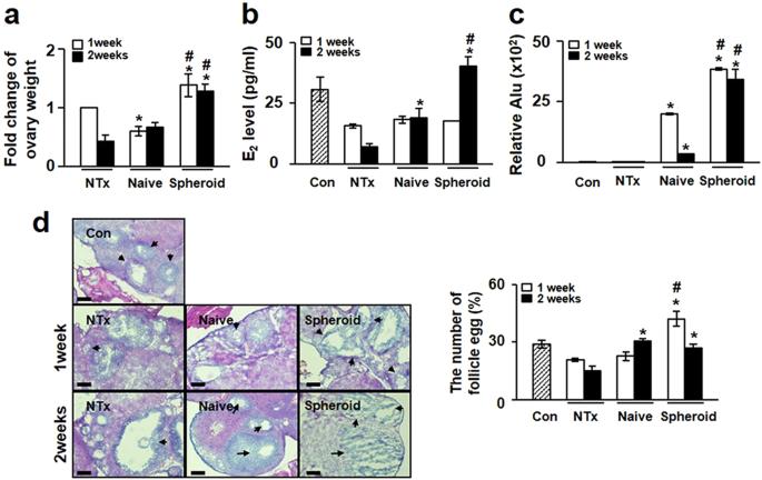 3D-cultured human placenta-derived mesenchymal stem cell