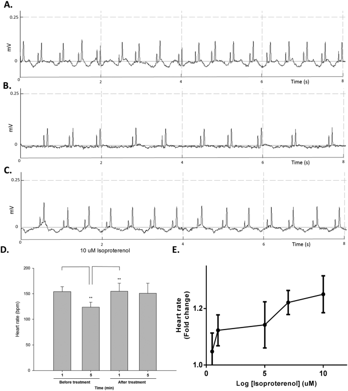 Development of a rapid and economic in vivo electrocardiogram