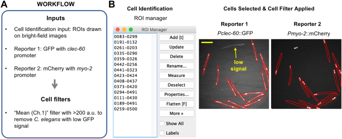 EzColocalization: An ImageJ plugin for visualizing and measuring