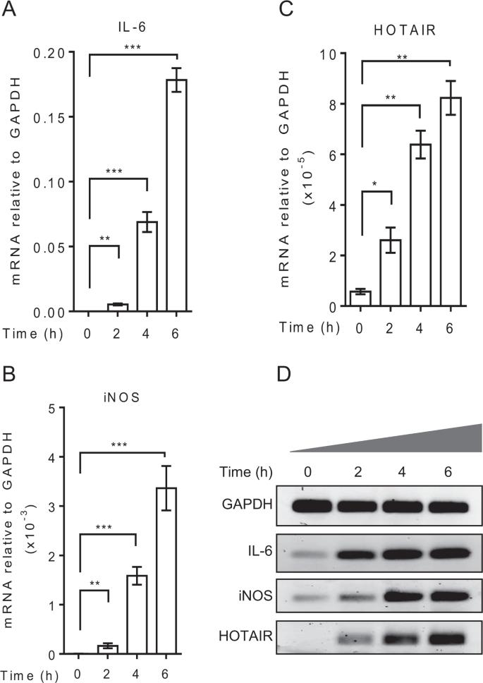 LncRNA HOTAIR regulates lipopolysaccharide-induced cytokine
