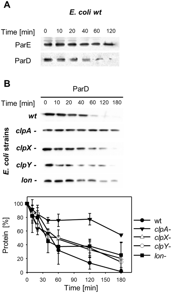 ClpAP protease is a universal factor that activates the parDE toxin