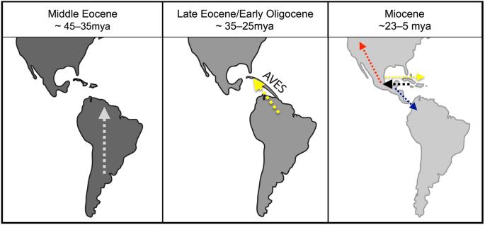 Island Ancestors and New World Biogeography: A Case Study