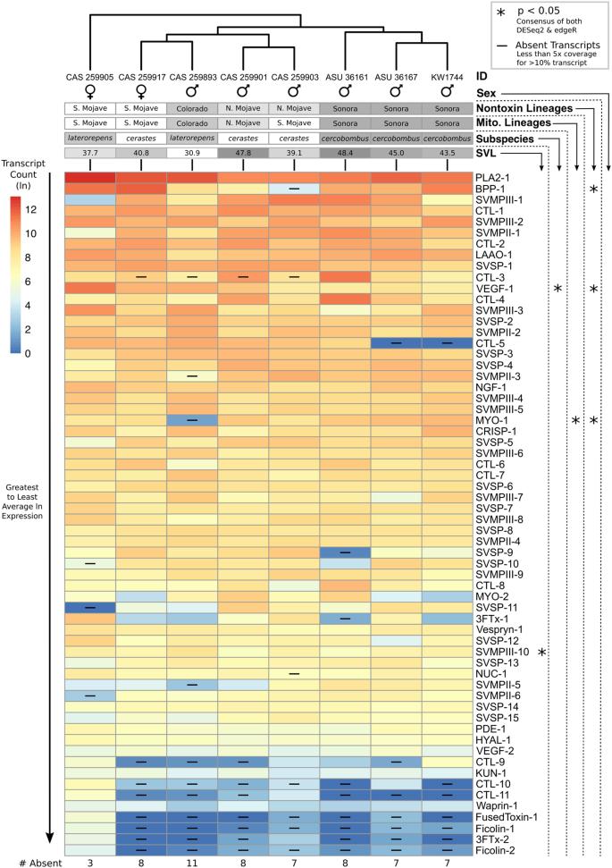 Comparative venom-gland transcriptomics and venom proteomics