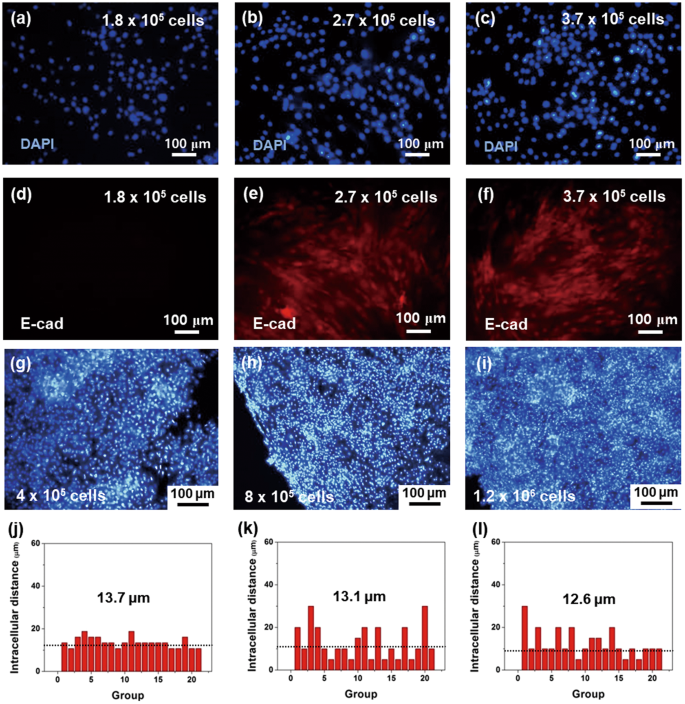 Protein-Engineered Large Area Adipose-derived Stem Cell