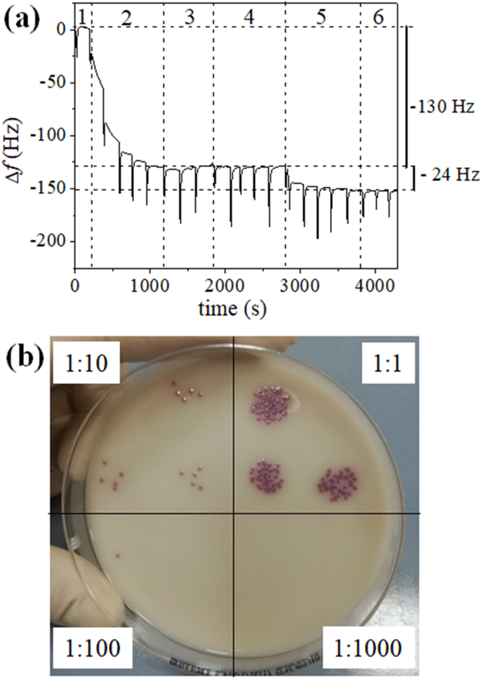 QCM-based immunosensor for rapid detection of Salmonella