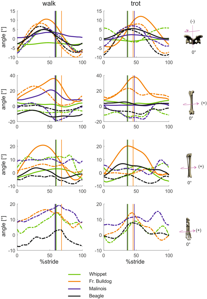 Three-dimensional kinematics of canine hind limbs: in vivo