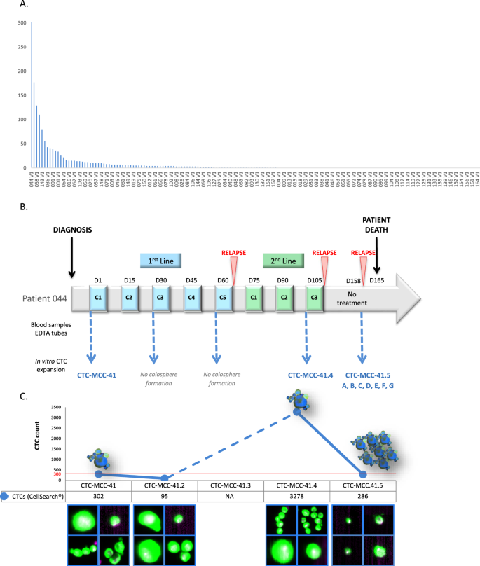 Autologous Cell Lines From Circulating Colon Cancer Cells Captured From Sequential Liquid Biopsies As Model To Study Therapy Driven Tumor Changes Scientific Reports