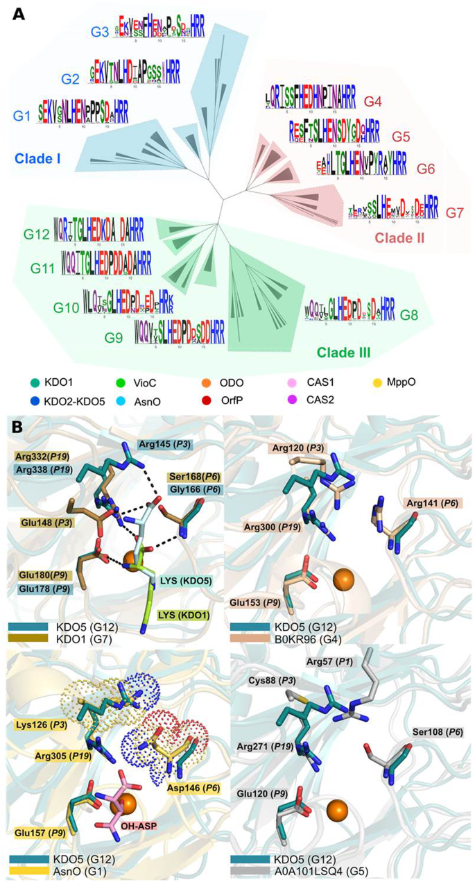 Structural Studies based on two Lysine Dioxygenases with