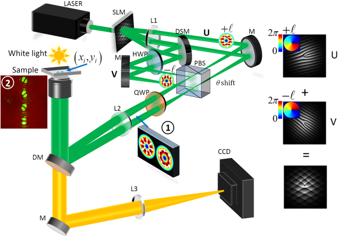 A vector holographic optical trap   Scientific Reports