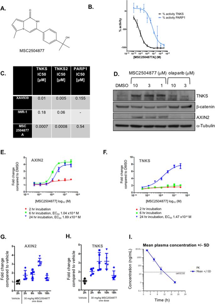 A novel tankyrase inhibitor, MSC2504877, enhances the