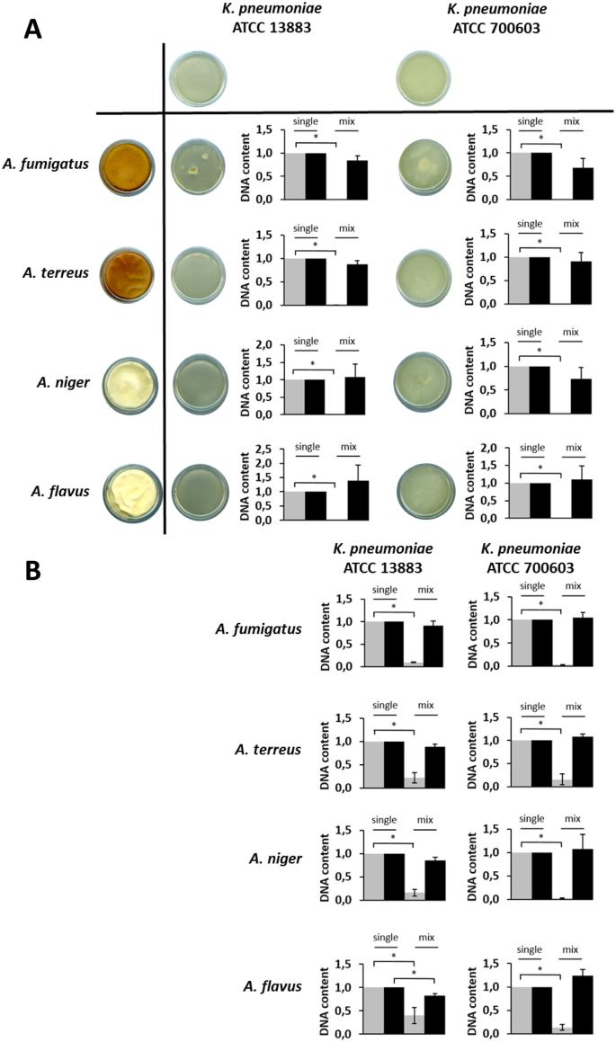 klebsiella pneumoniae toxine descrierea helmintelor