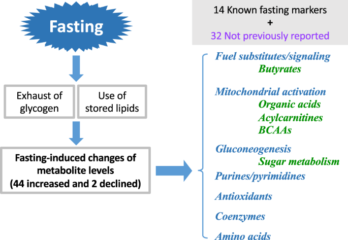 Diverse metabolic reactions activated during 58-hr fasting