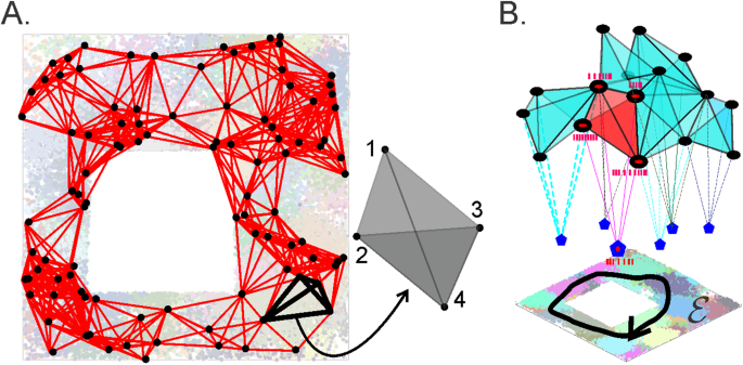Through synapses to spatial memory maps via a topological