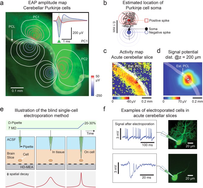 Accurate signal-source localization in brain slices by means of high