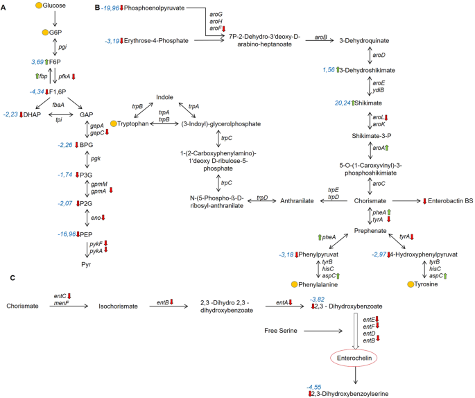 Metabolome and transcriptome-wide effects of the carbon storage