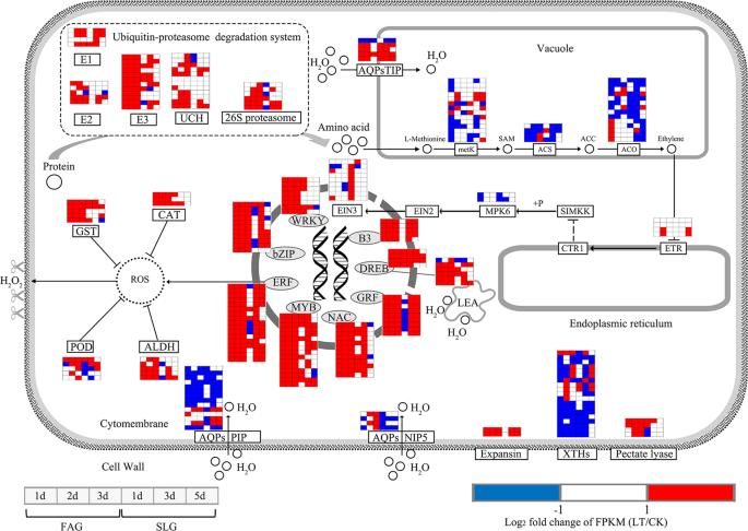 Associating transcriptional regulation for rapid germination