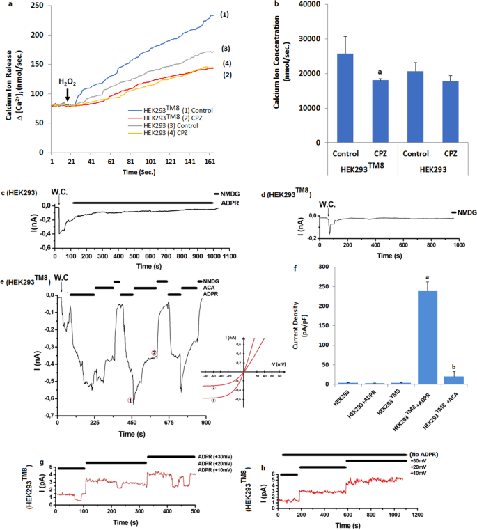 ADP-Ribose and oxidative stress activate TRPM8 channel in