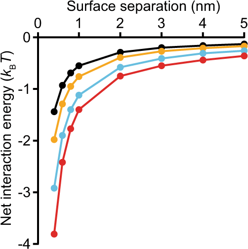 Early stages of aggregation of engineered α-synuclein