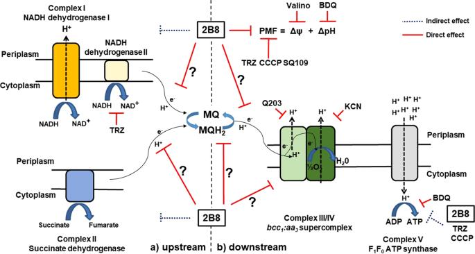 2-aminoimidazoles collapse mycobacterial proton motive force