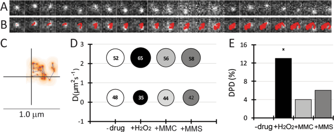 Single molecule tracking reveals functions for RarA at