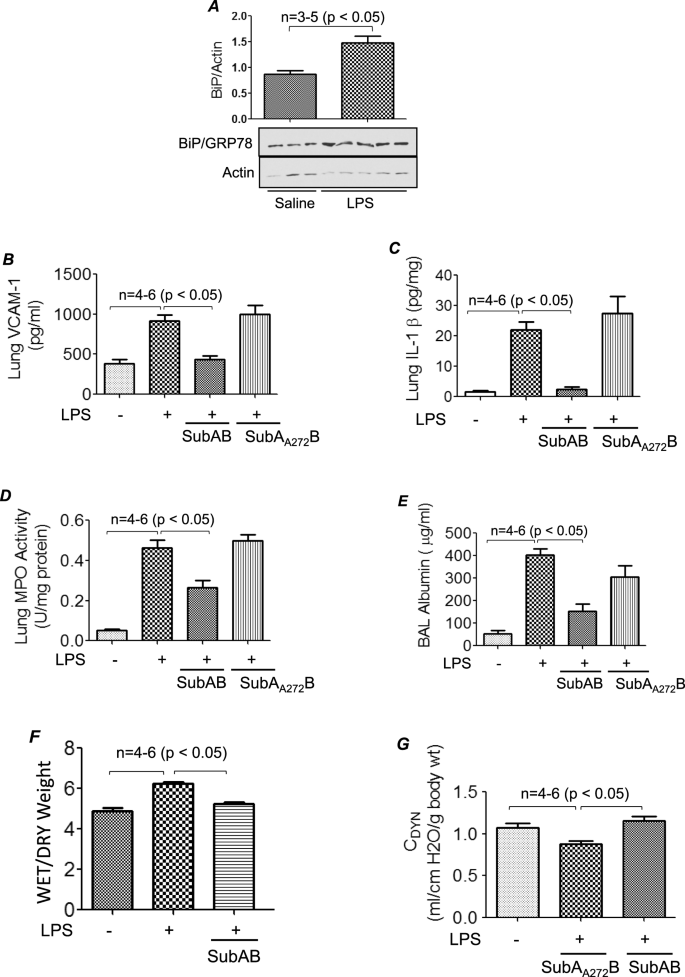 Selective Inactivation of Intracellular BiP/GRP78 Attenuates