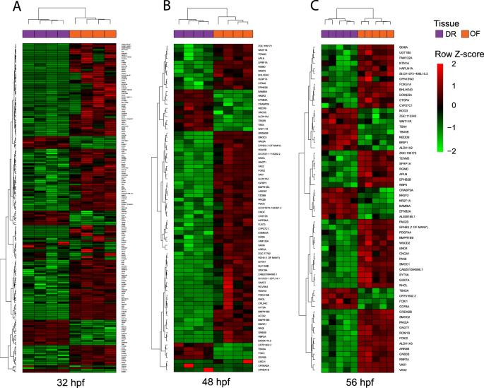 Transcriptome profiling of zebrafish optic fissure fusion