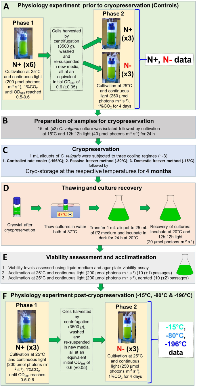 Effects of cryopreservation on viability and functional