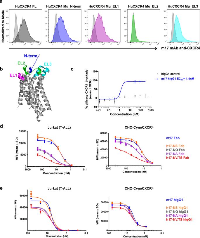 Optimal design, anti-tumour efficacy and tolerability of anti-CXCR4