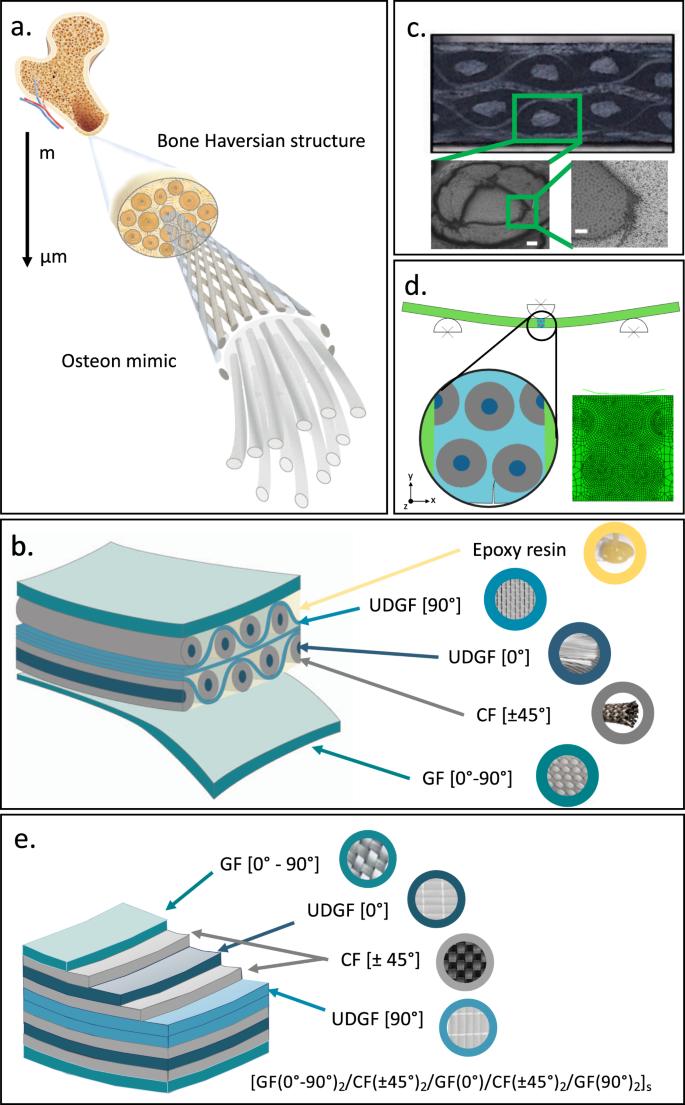 Bone-inspired enhanced fracture toughness of de novo fiber
