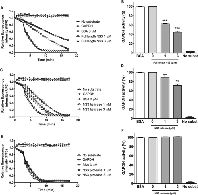 Dengue virus nonstructural 3 protein interacts directly with