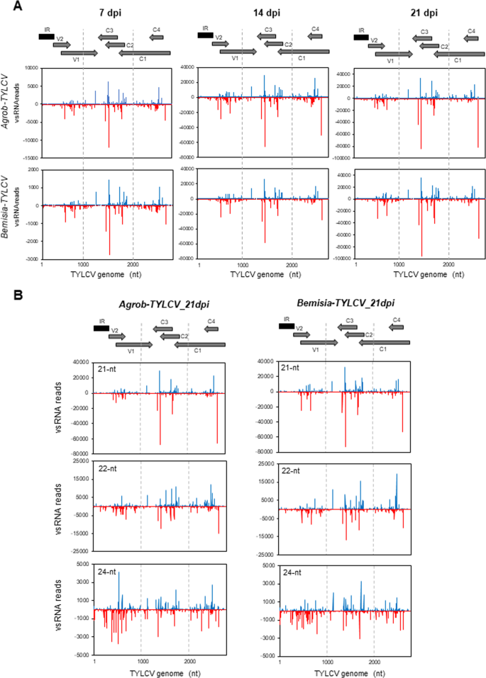 Integrated single-base resolution maps of transcriptome, sRNAome and