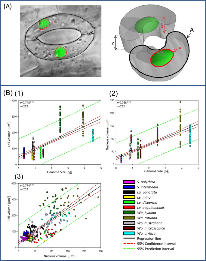 Variation in genome size, cell and nucleus volume