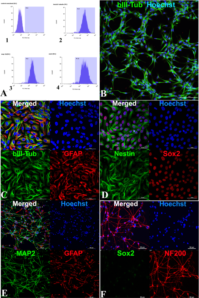 Tissue Engineered Neural Constructs Composed of Neural