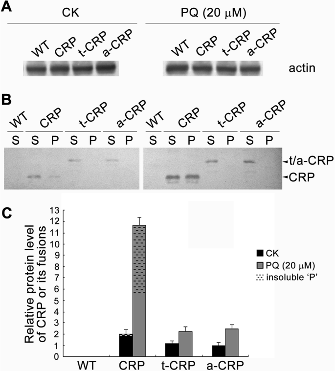 Hyper-acidic fusion minipeptides escort the intrinsic