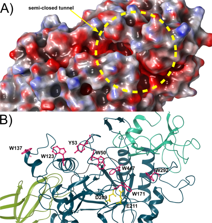 The crystal structure of the chitinase ChiA74 of Bacillus