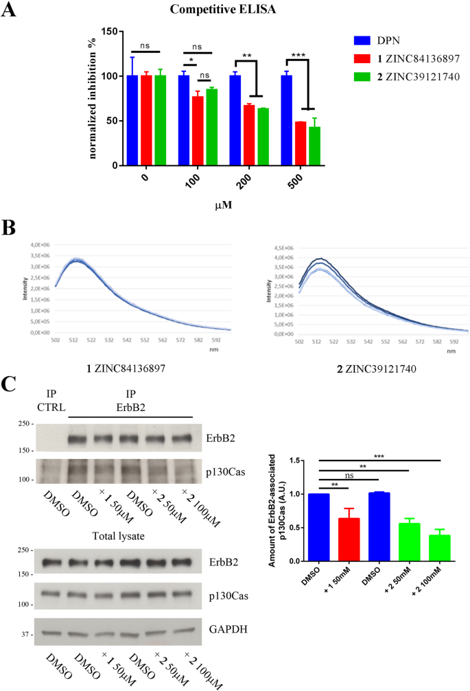 Modeling ErbB2-p130Cas interaction to design new potential