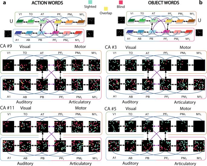 Visual cortex recruitment during language processing in