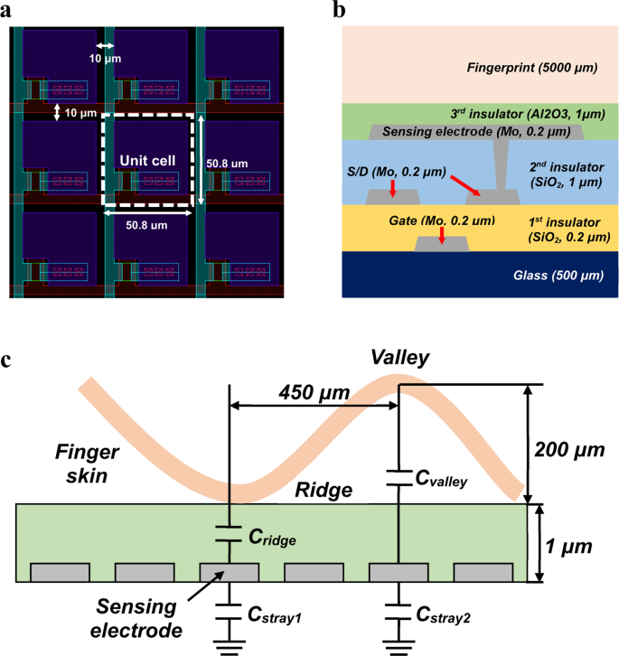 Highly Sensitive Active-Matrix Driven Self-Capacitive
