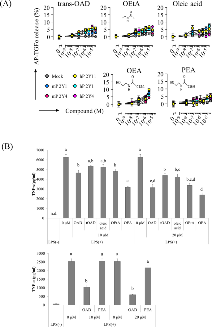 Identification of P2Y receptors involved in oleamide