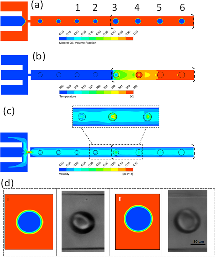 Dynamics of temperature-actuated droplets within microfluidics