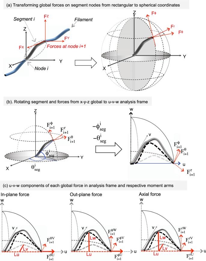 Capturing 3D large-strain Euler-bending filament dynamics in