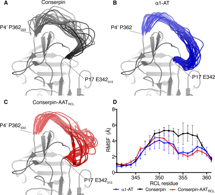 Reactive centre loop dynamics and serpin specificity