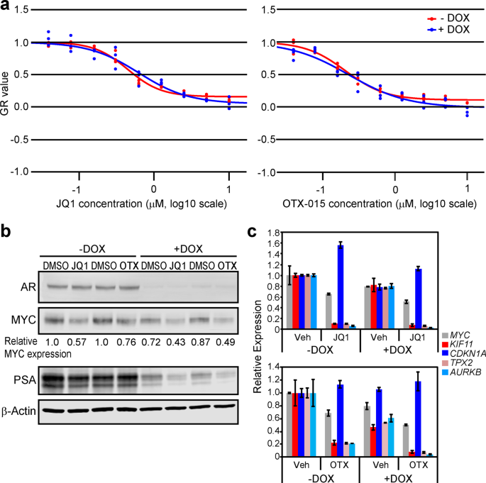 Maintenance of MYC expression promotes de novo resistance to
