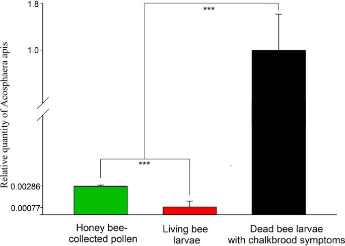 Honey bee-collected pollen is a potential source of