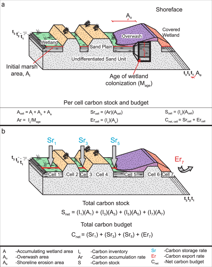 (a) conceptual model of the freshwater coastal wetland carbon budget model  (not to scale)  (b) depiction of the cell concept and summation of carbon  stock