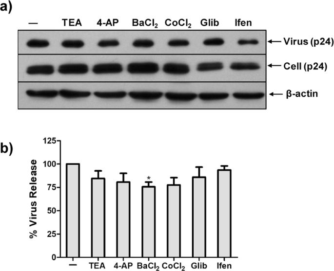 G protein-coupled and ATP-sensitive inwardly rectifying potassium