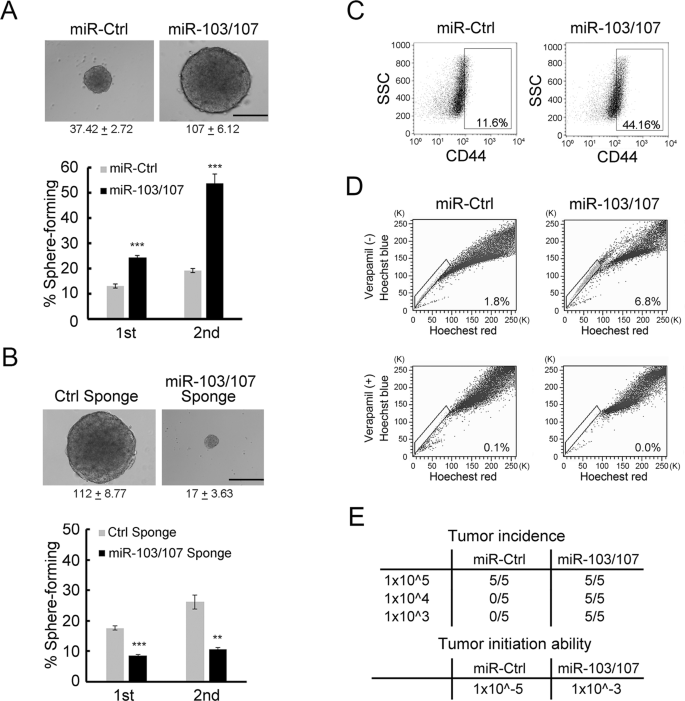 Mir 103 107 Prolong Wnt B Catenin Signaling And Colorectal Cancer Stemness By Targeting Axin2 Scientific Reports