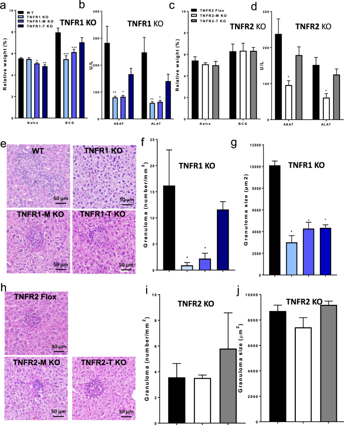 Myeloid cell TNFR1 signaling dependent liver injury and inflammation