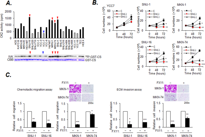 Protein kinase CK2-dependent aerobic glycolysis-induced